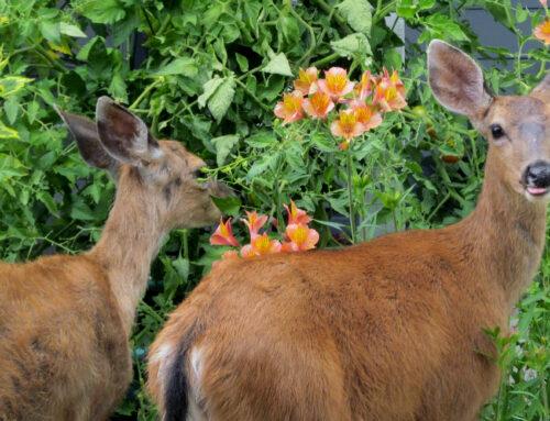 Keeping Deer Away from Your Garden