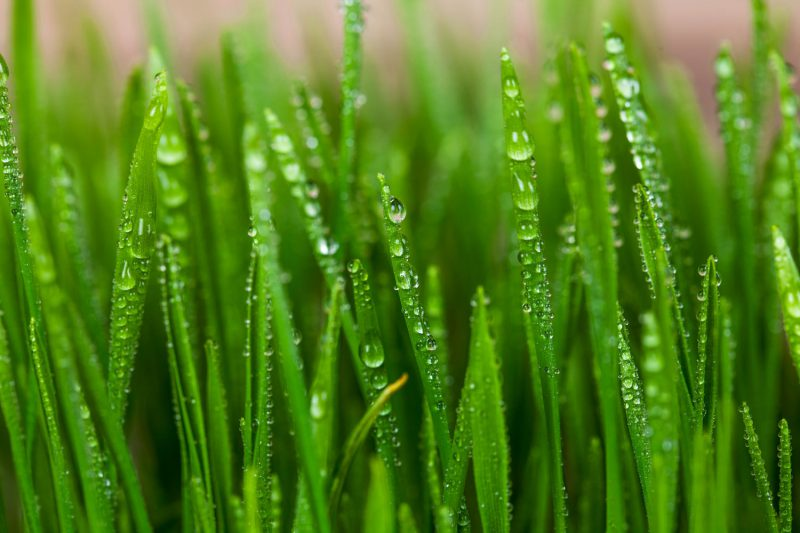 What's the Secret to Keeping a Great Lawn?