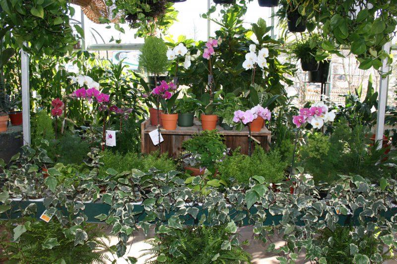 Vibrant House Plants