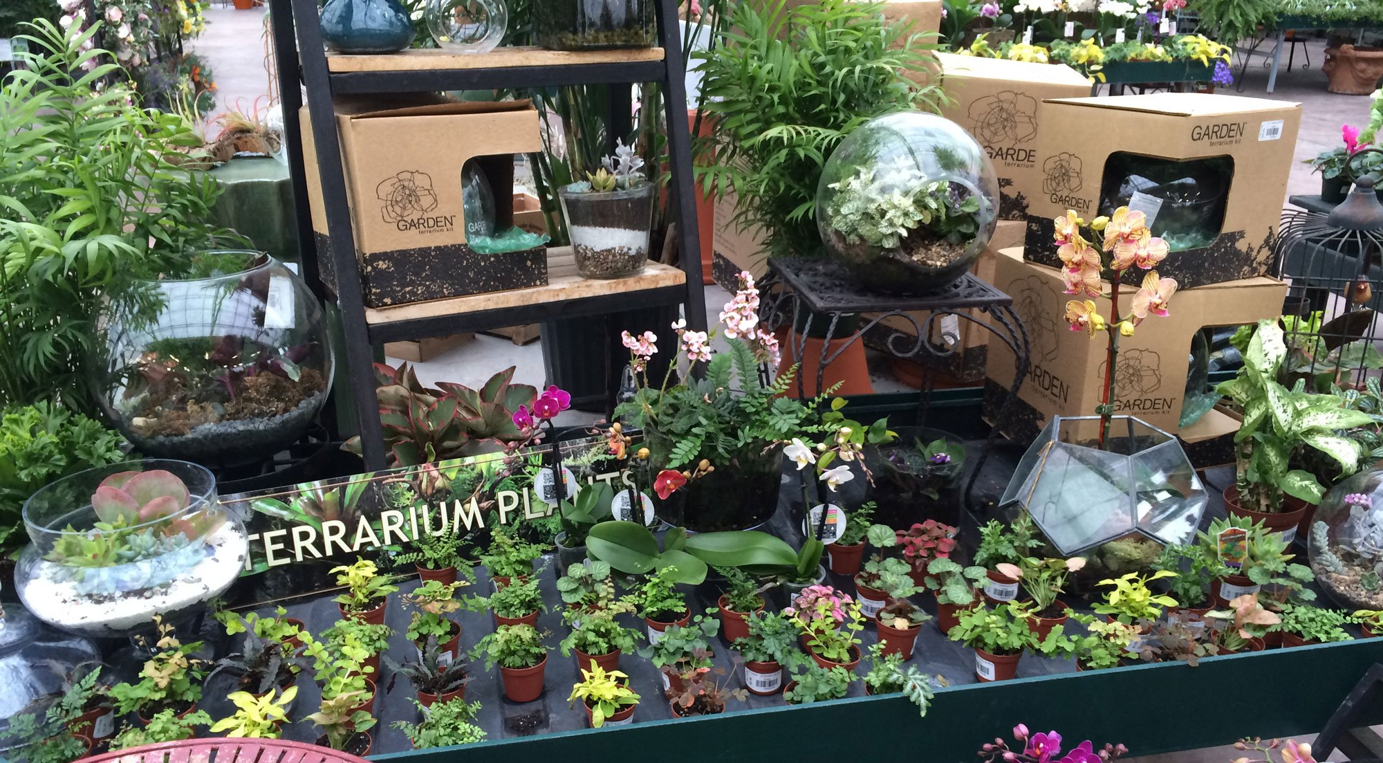 how to build a terrarium the farm at green village. Black Bedroom Furniture Sets. Home Design Ideas